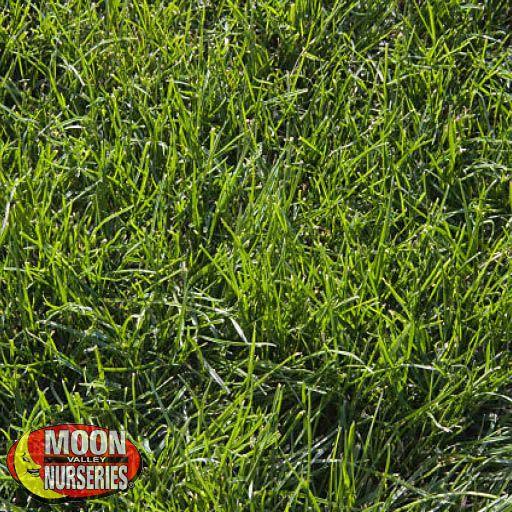 Sod Bobsod® Grass