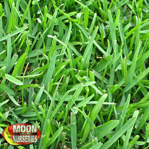 Sod St Augustine Grass