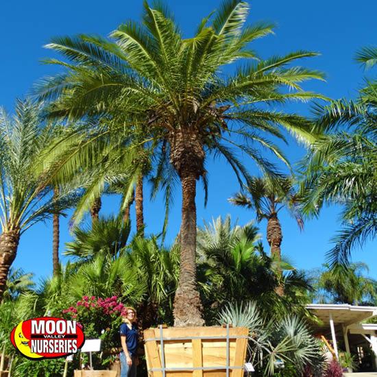 palm_paradise_14