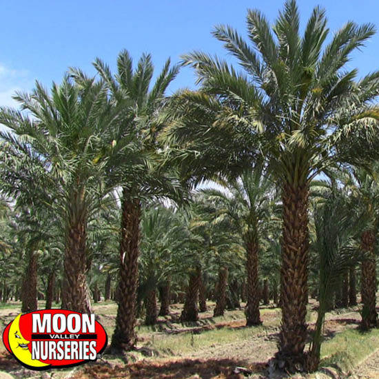 DESERT_PALM_FARM_PAGE_2