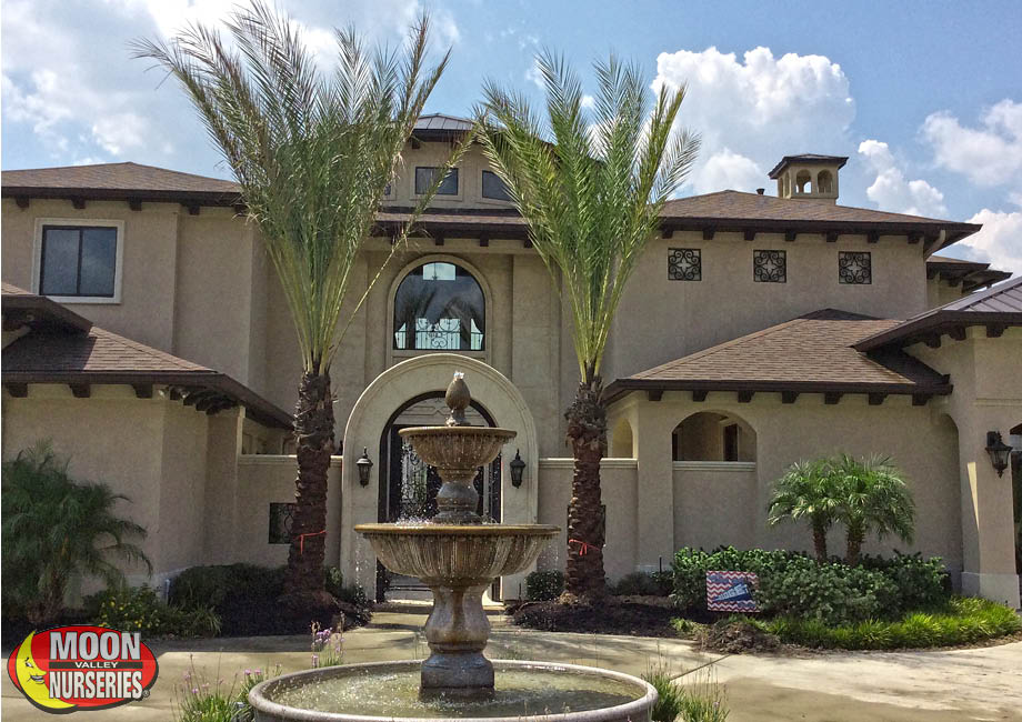 date_palms_front_house