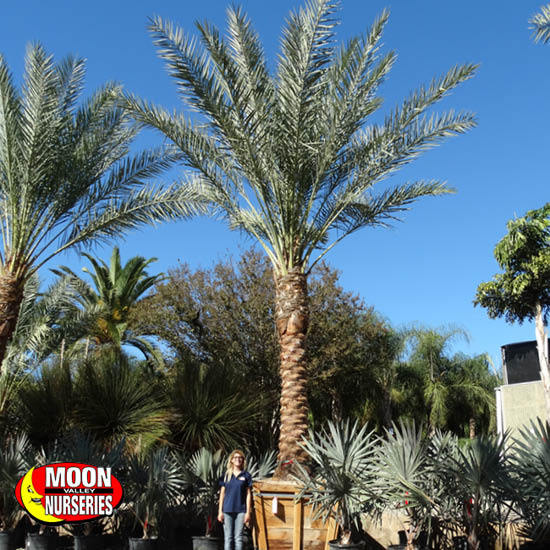 palm_paradise_8