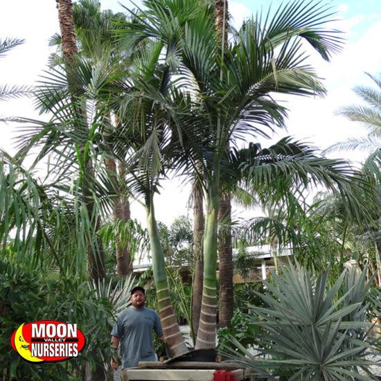 palm_paradise_11
