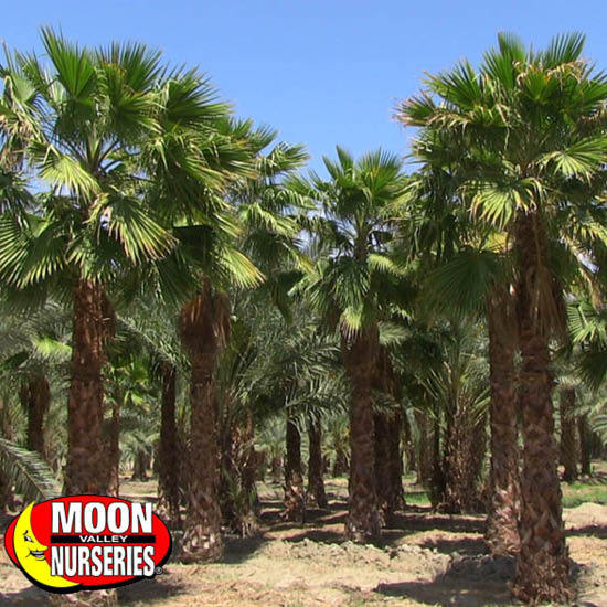 DESERT_PALM_FARM_PAGE_1