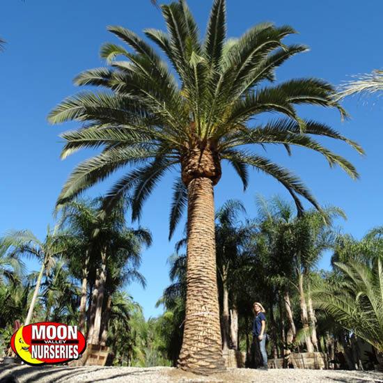 palm_paradise_7