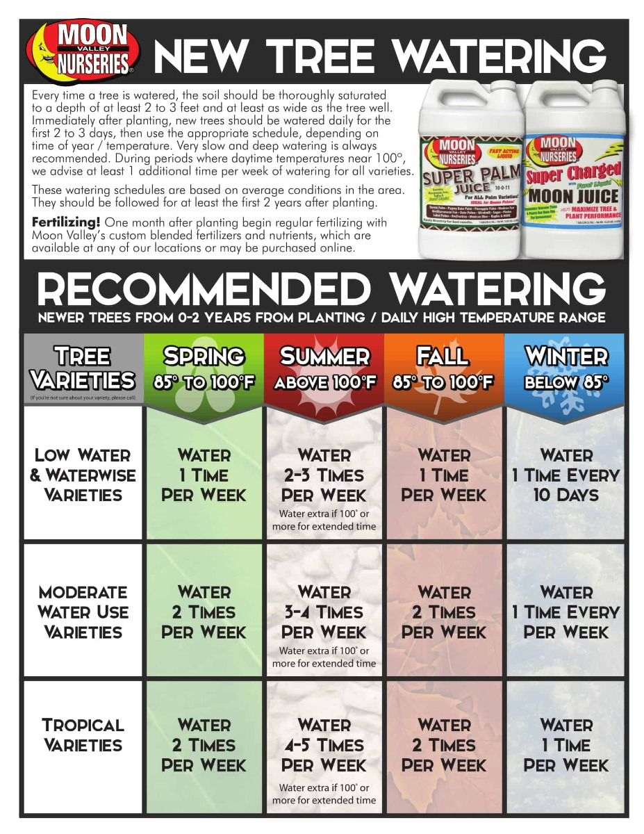 Watering New Trees Schedule