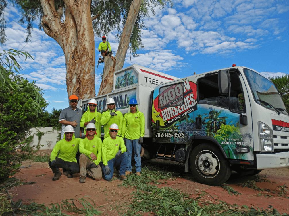 Tree Care NV